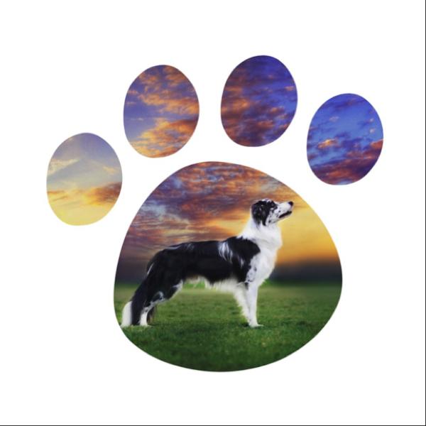 amazingdoggos Profile Picture