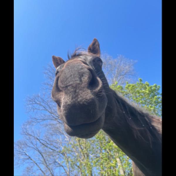 lydiandthehorses Profile Picture