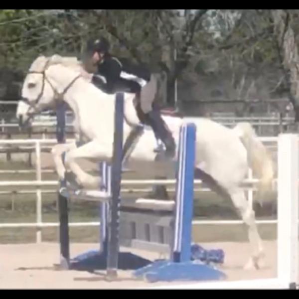 horsegirl2069 Profile Picture