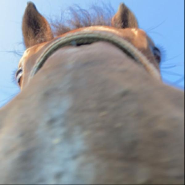 randomaj Profile Picture